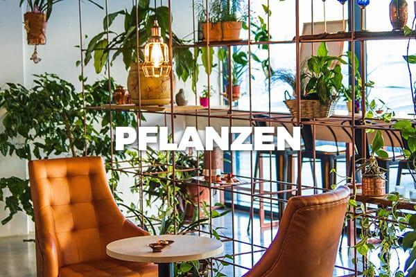 Bloomer's Pflanzen