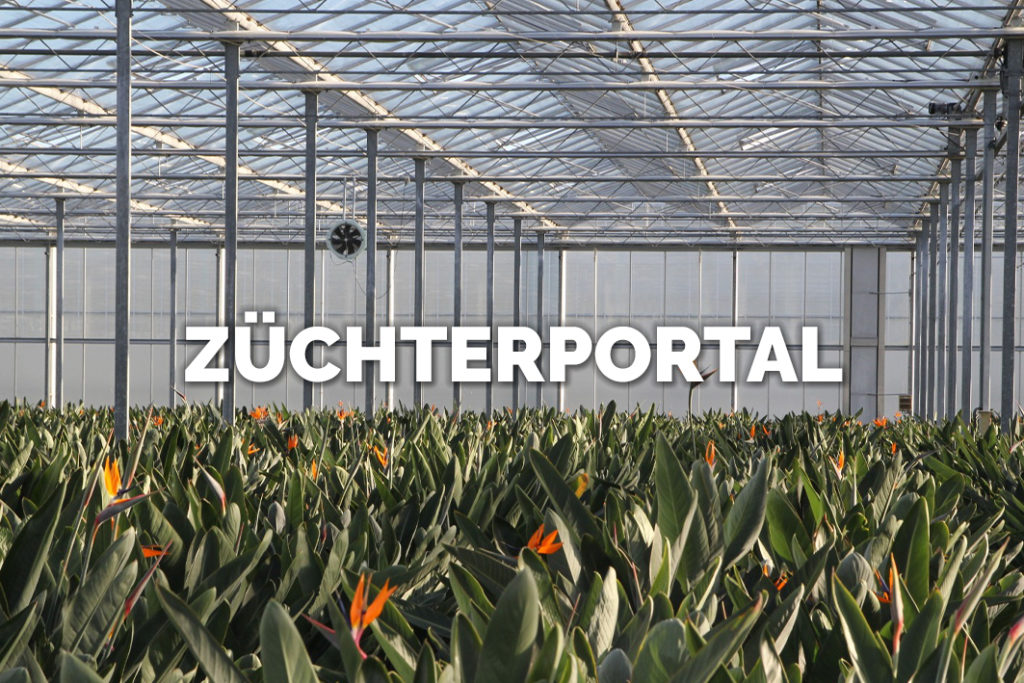 Bloomer's Züchterportal